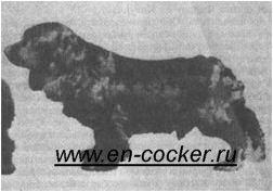 Английский кокер спаниель история породы