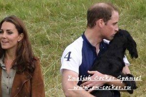 Монархи Великобритании и их собаки