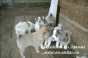 Как выбрать хорошего щенка (Выбор лучшего щенка в помете)