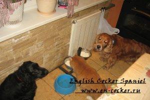 Дрессировка собак, дрессировка щенка