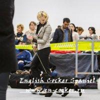 Выставка Английский кокер спаниель бебики