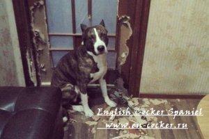 Как научить щенка спокойному поведению за закрытой дверью